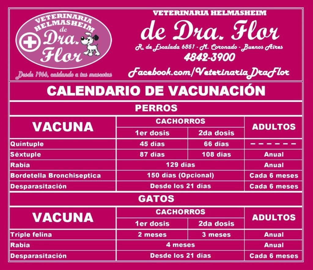 Vacunas Gatos Calendario.Calendario De Vacunacion Kontrolcan