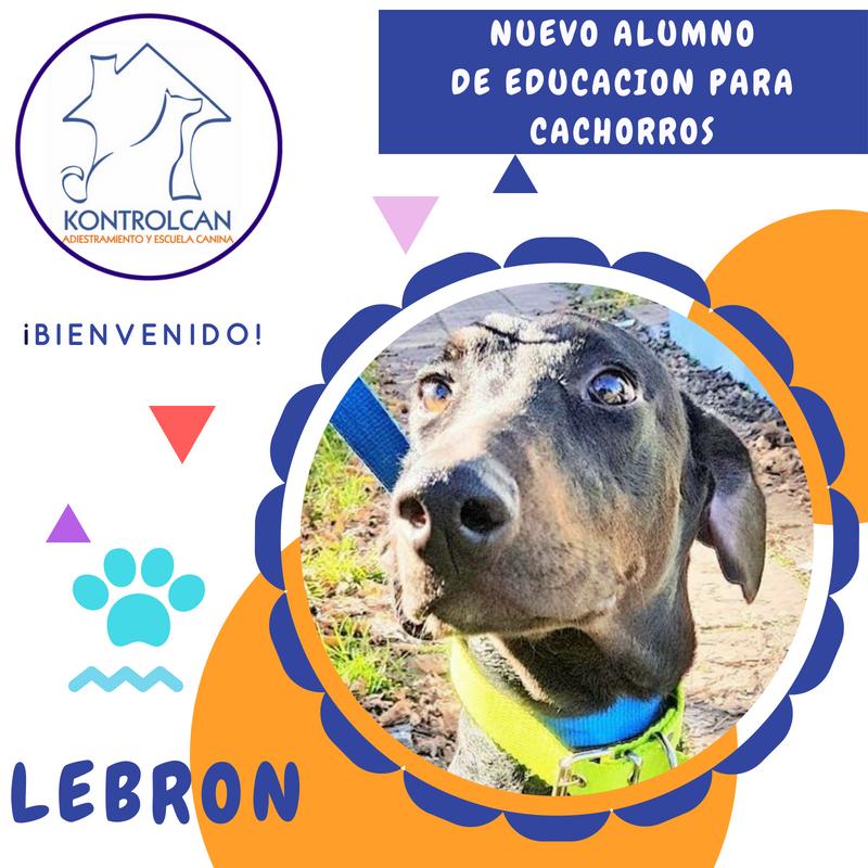 Bienvenido Lebron