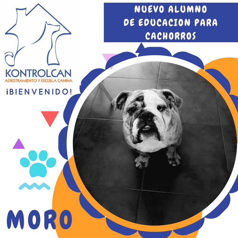 Bienvenido Moro
